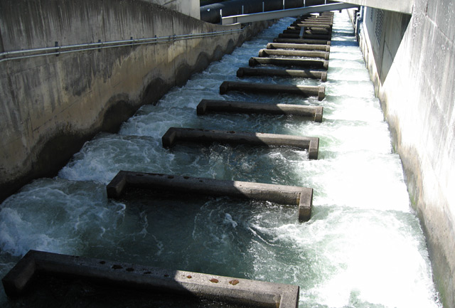 October 2006 for Bonneville dam fish camera